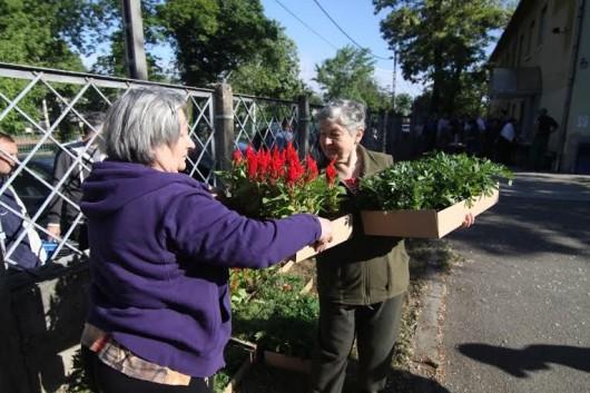 """Lezárult a """"Virágos Csepelért"""" program – Egynyári virágokat kaptak a lakók"""