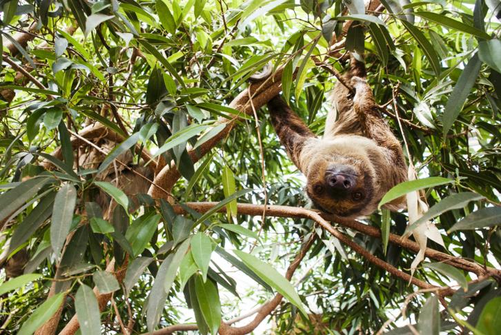 Születésnapi programokkal készül a 150 éves Állatkert