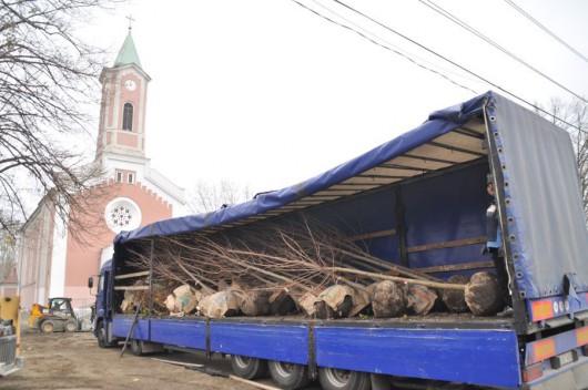 Új fákkal gazdagodott a Szent Imre tér